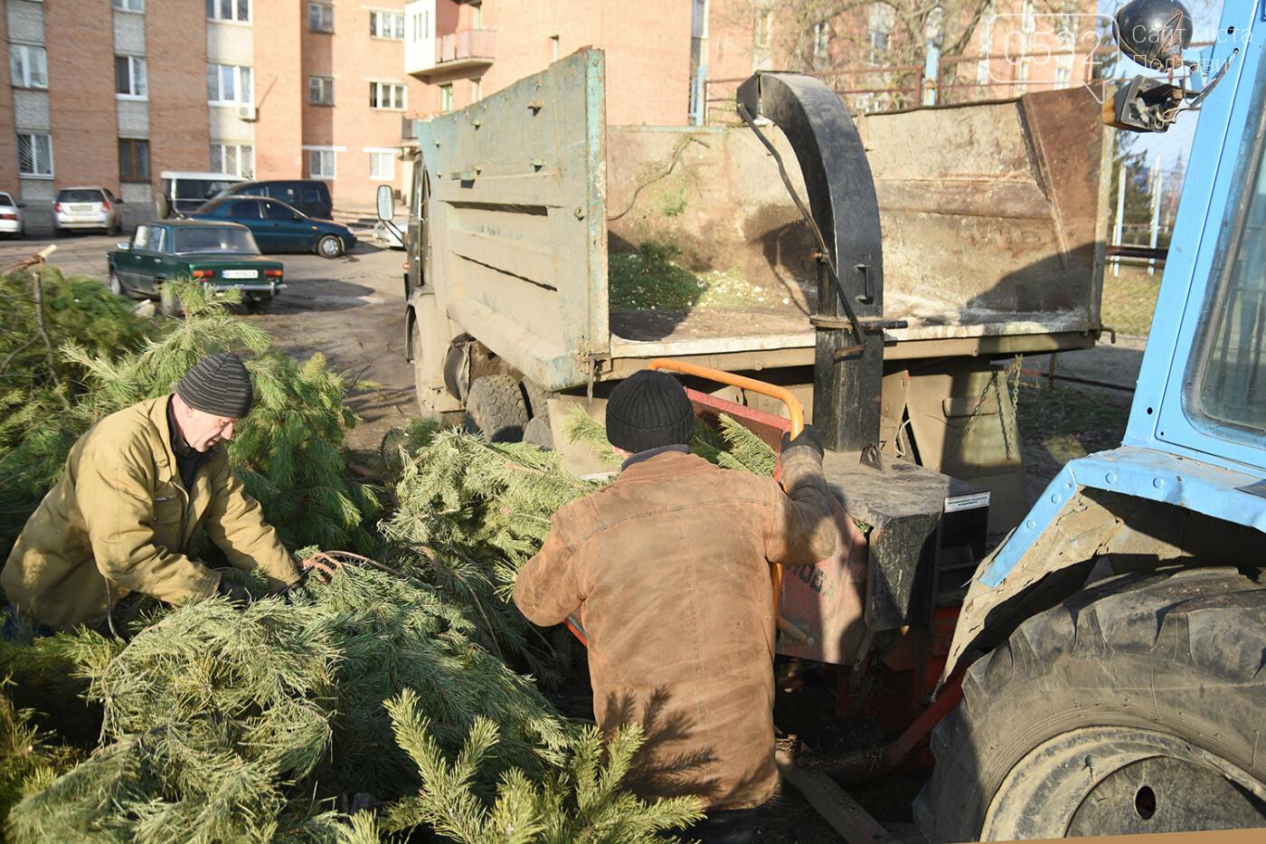 У Полтаві новорічні ялинки подрібнюють, щоб не завантажувати сміттєзвалище, фото-3