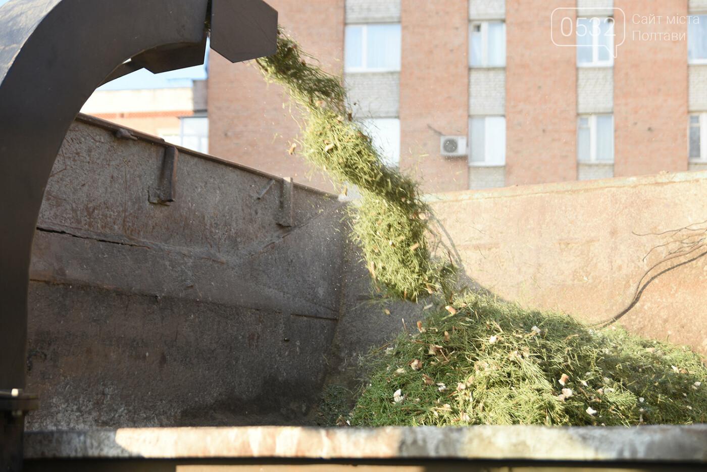 У Полтаві новорічні ялинки подрібнюють, щоб не завантажувати сміттєзвалище, фото-5