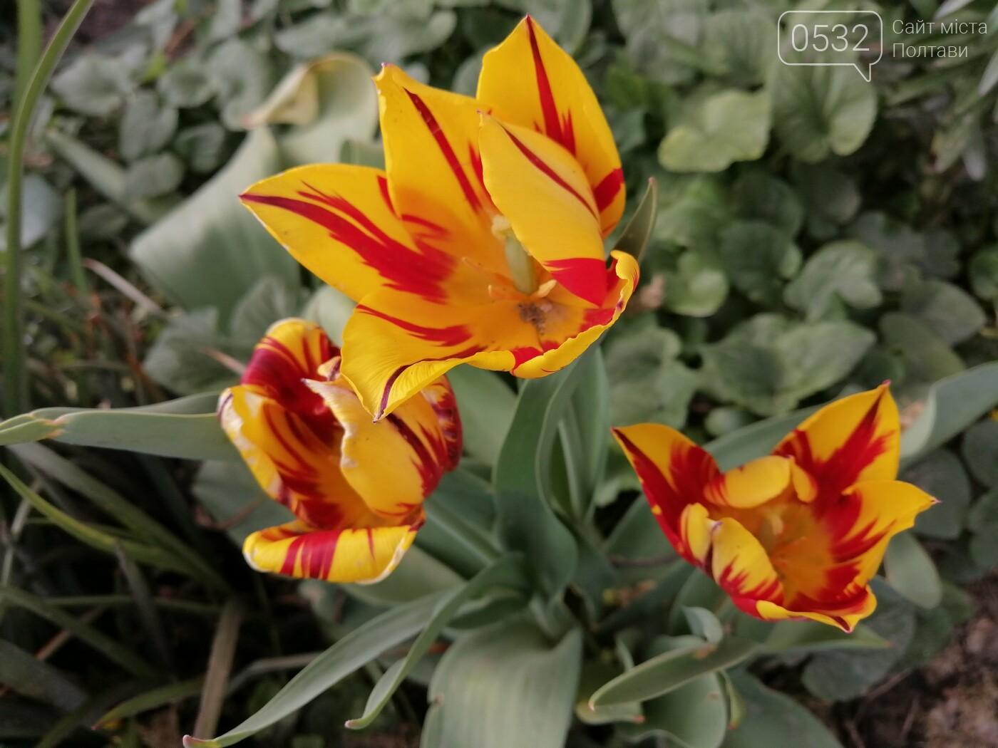 Весняна Полтава (ФОТОРЕПОРТАЖ), фото-6