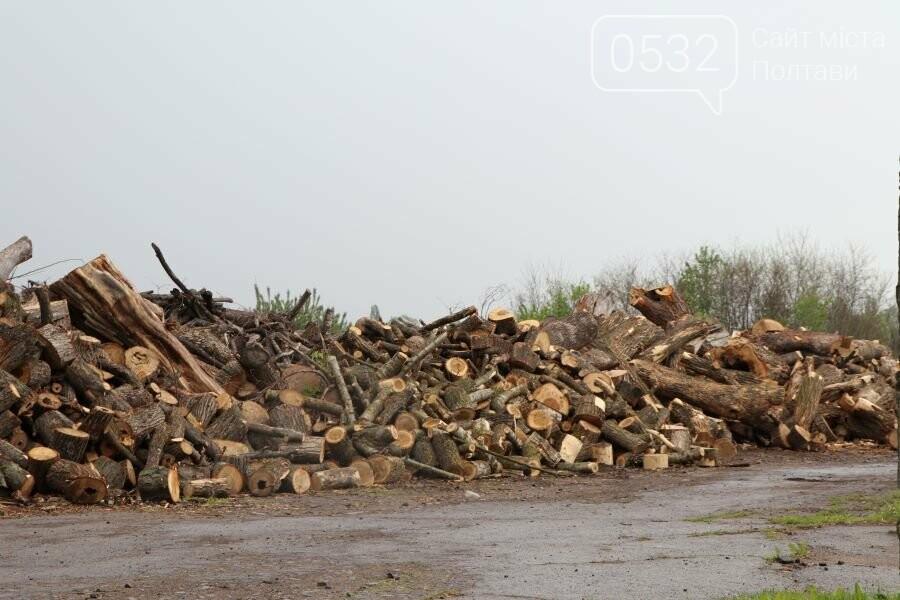 За минулий рік «Декоративні культури» спиляли 1327 аварійних дерев, фото-3