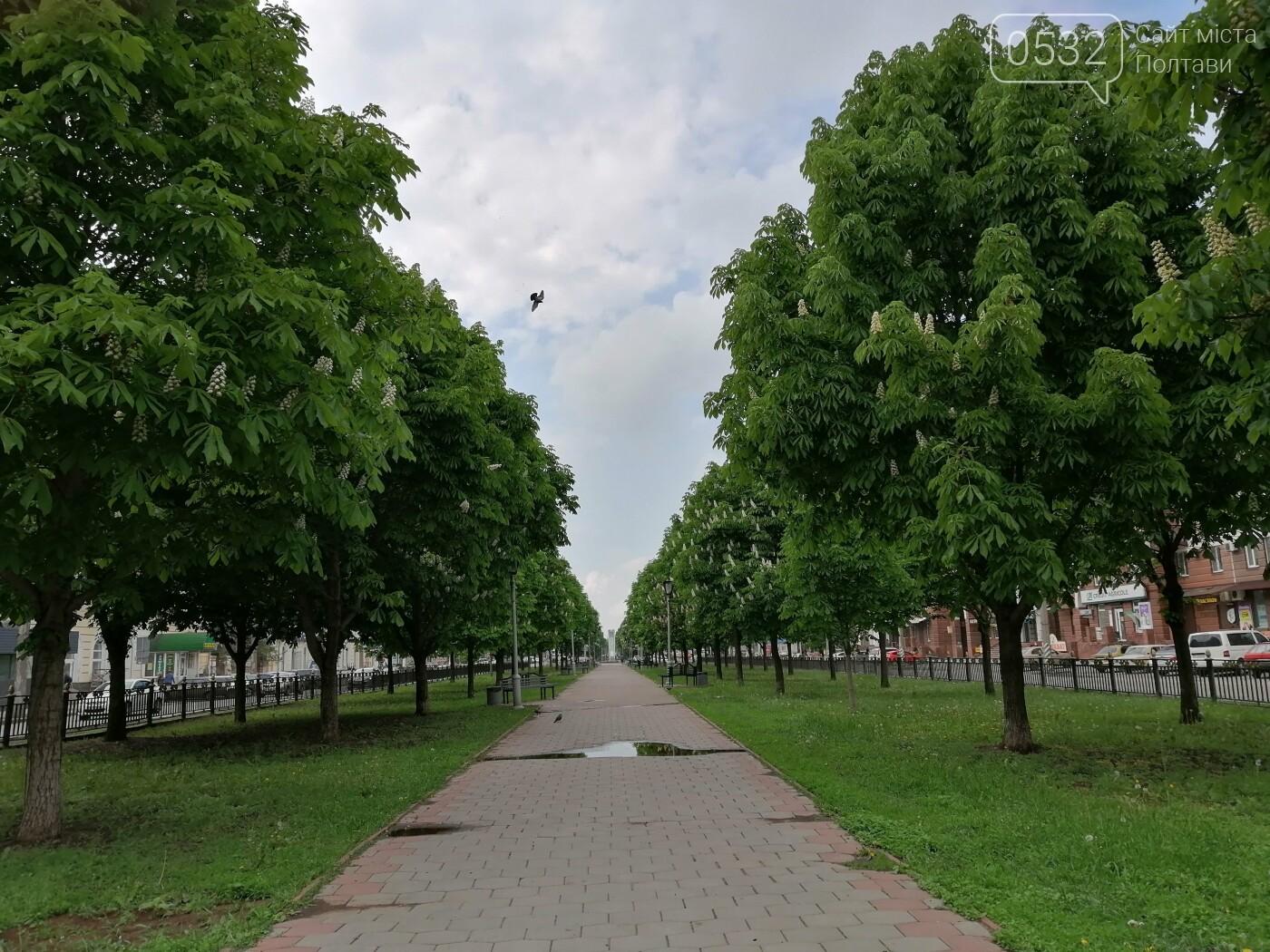 У Полтаві зацвіли каштани (ФОТОРЕПОРТАЖ), фото-7