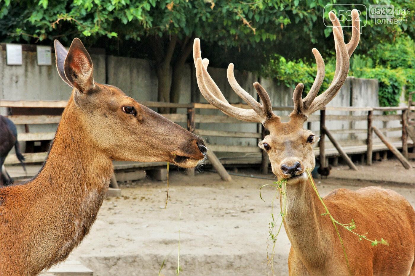 Шедеври кухні, райська природа, контактний зоопарк – вас чекає «Vivat Провінція», фото-8