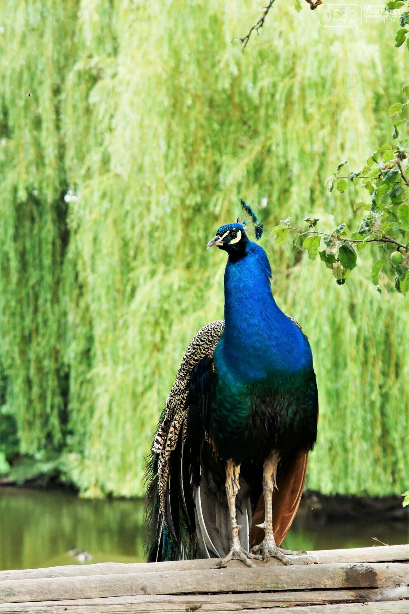 Шедеври кухні, райська природа, контактний зоопарк – вас чекає «Vivat Провінція», фото-12