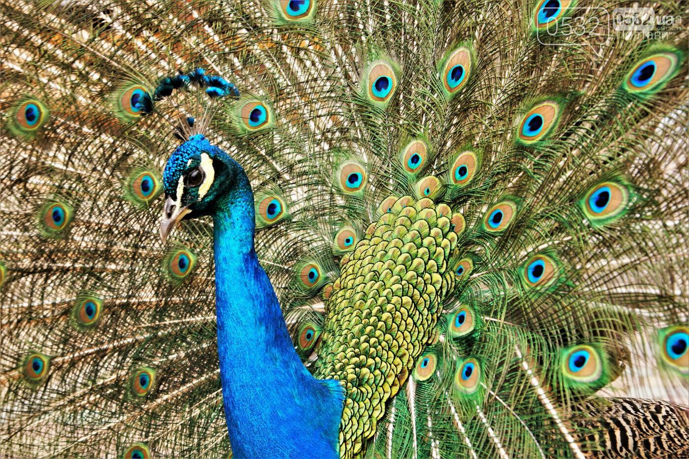 Шедеври кухні, райська природа, контактний зоопарк – вас чекає «Vivat Провінція», фото-13
