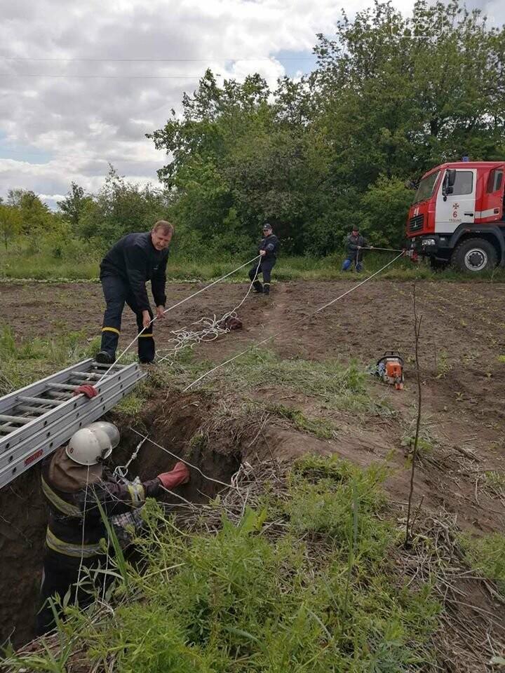 На Полтавщині рятувальники витягнули собаку із колодязя глибиною 40 метрів, фото-1