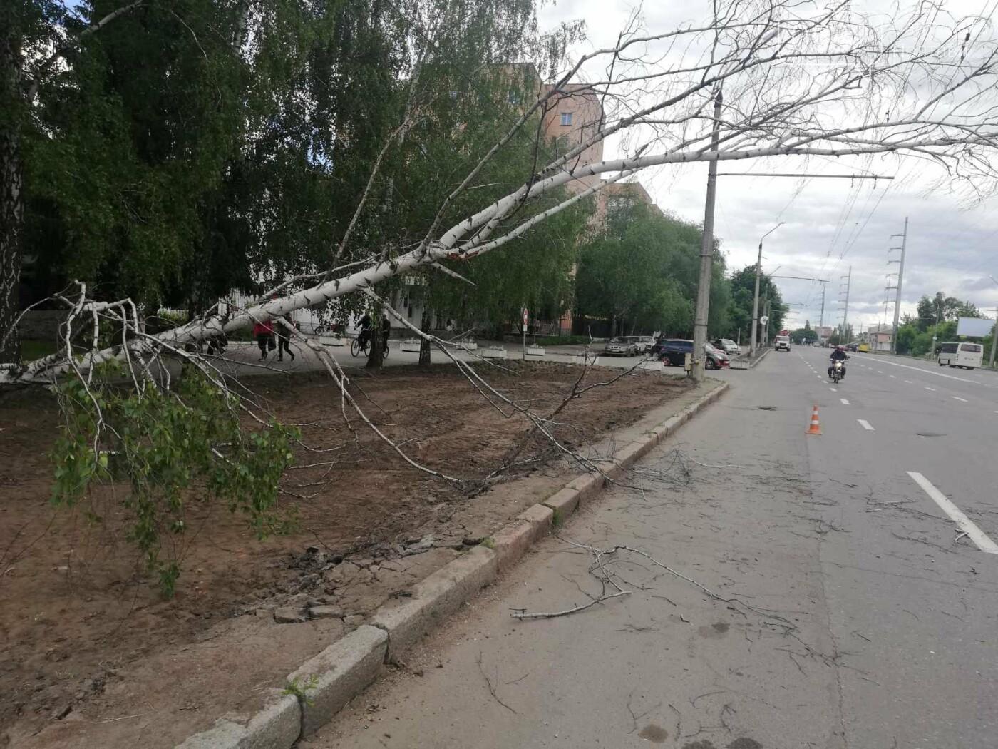 У Полтаві біля інституту зв'язку на дроти впала береза (ФОТО), фото-1