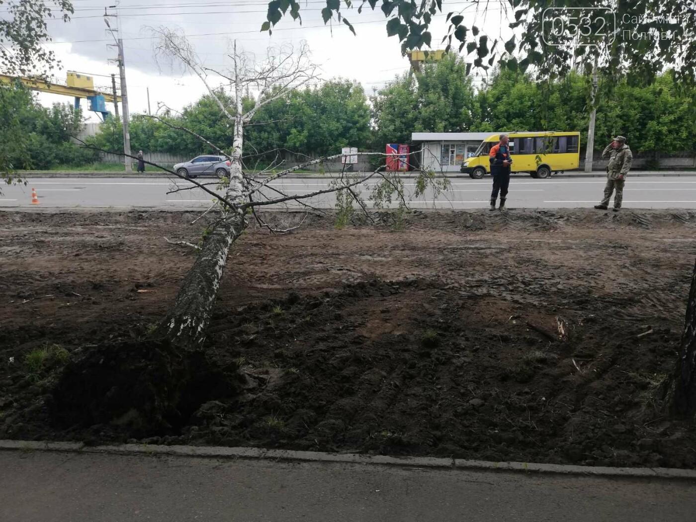 У Полтаві біля інституту зв'язку на дроти впала береза (ФОТО), фото-4