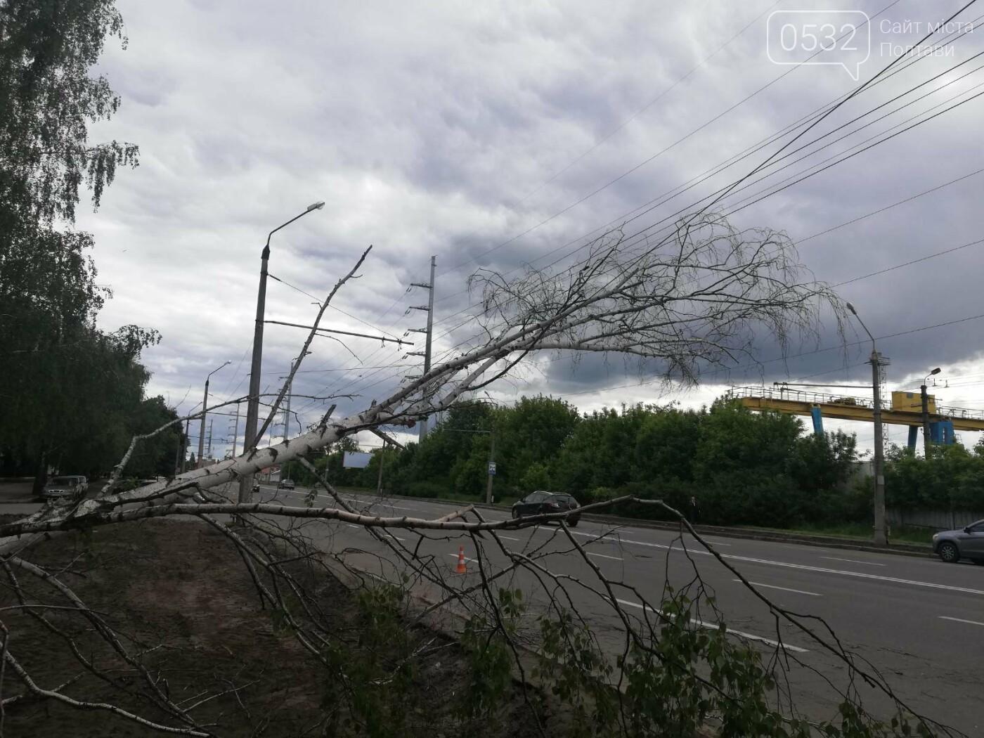 У Полтаві біля інституту зв'язку на дроти впала береза (ФОТО), фото-3