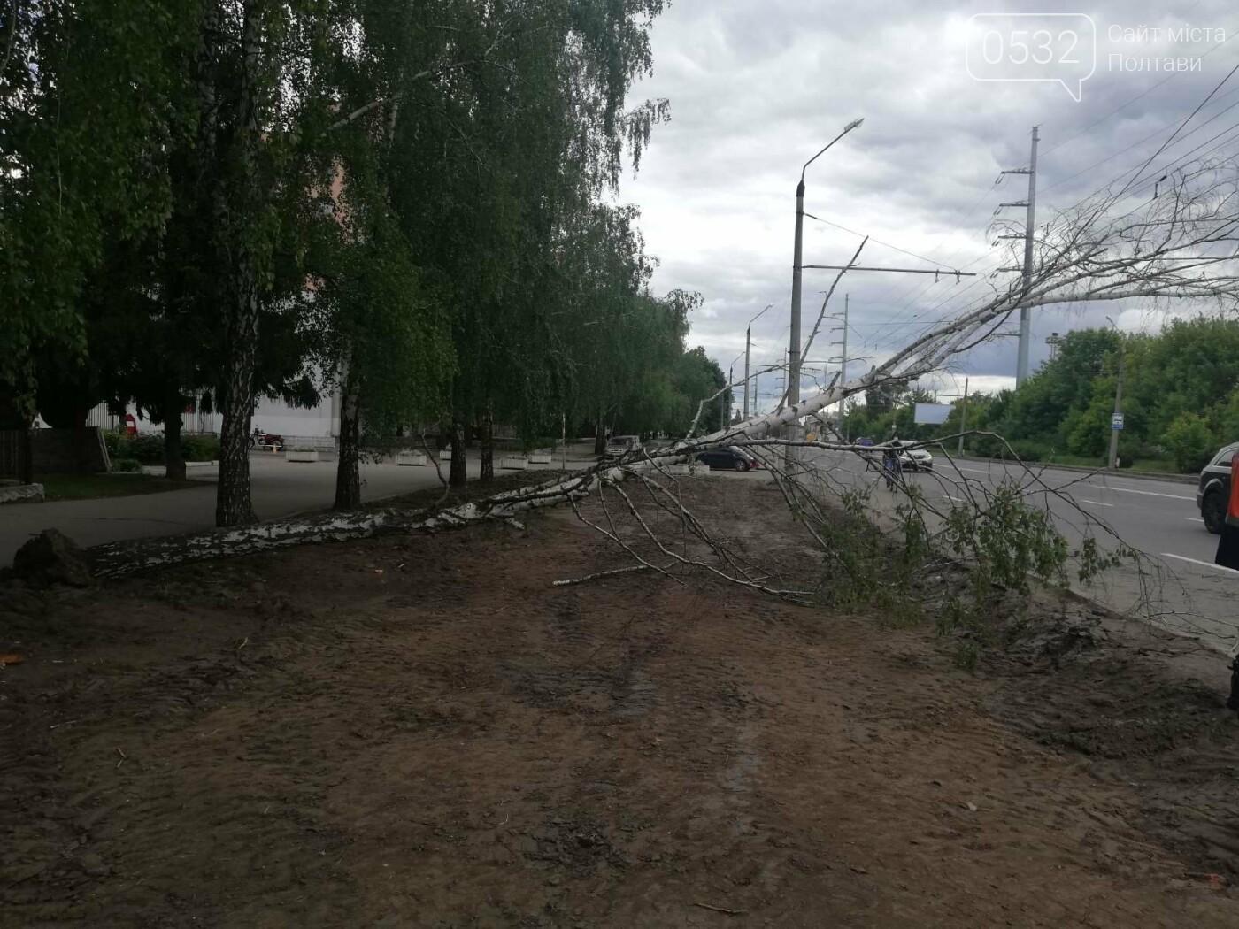 У Полтаві біля інституту зв'язку на дроти впала береза (ФОТО), фото-2