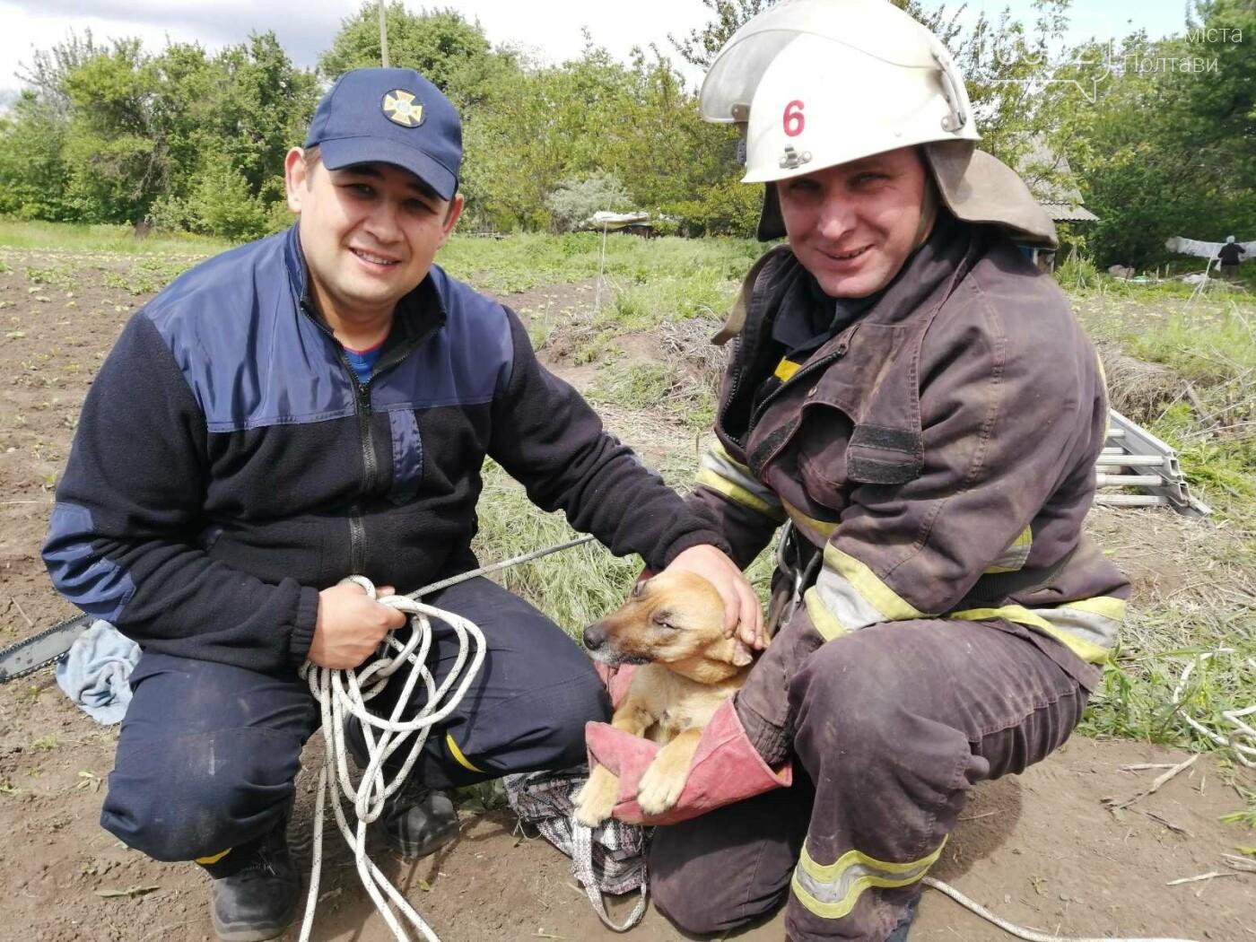 На Полтавщині рятувальники витягнули собаку із колодязя глибиною 40 метрів, фото-4