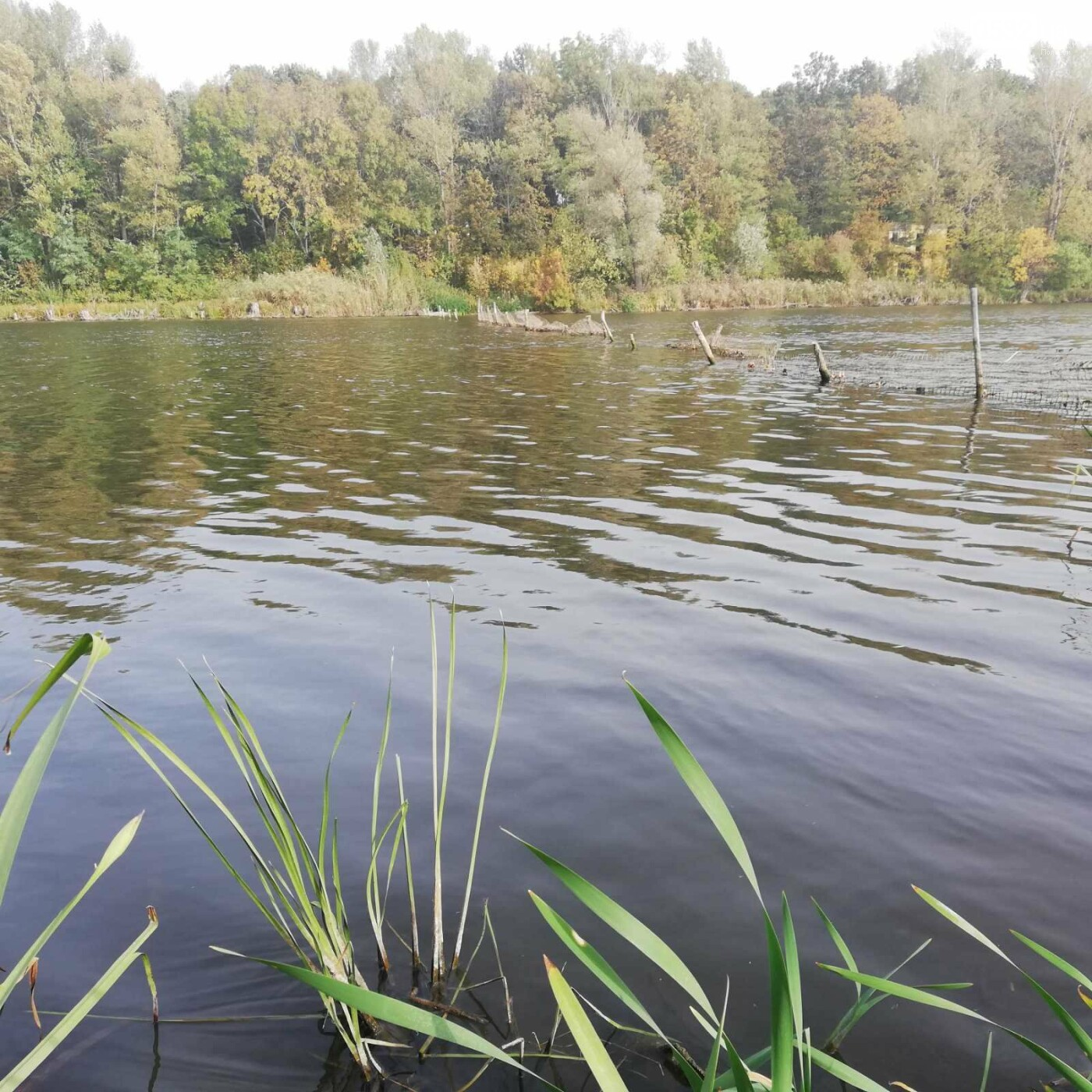 На Полтавщині тривають змагання зі спортивної риболовлі (ФОТО), фото-10
