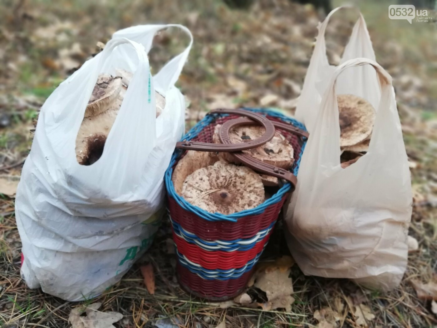 Із Полтави – за парасольками: розкриваємо грибні місця (ФОТОРЕПОРТАЖ), фото-13