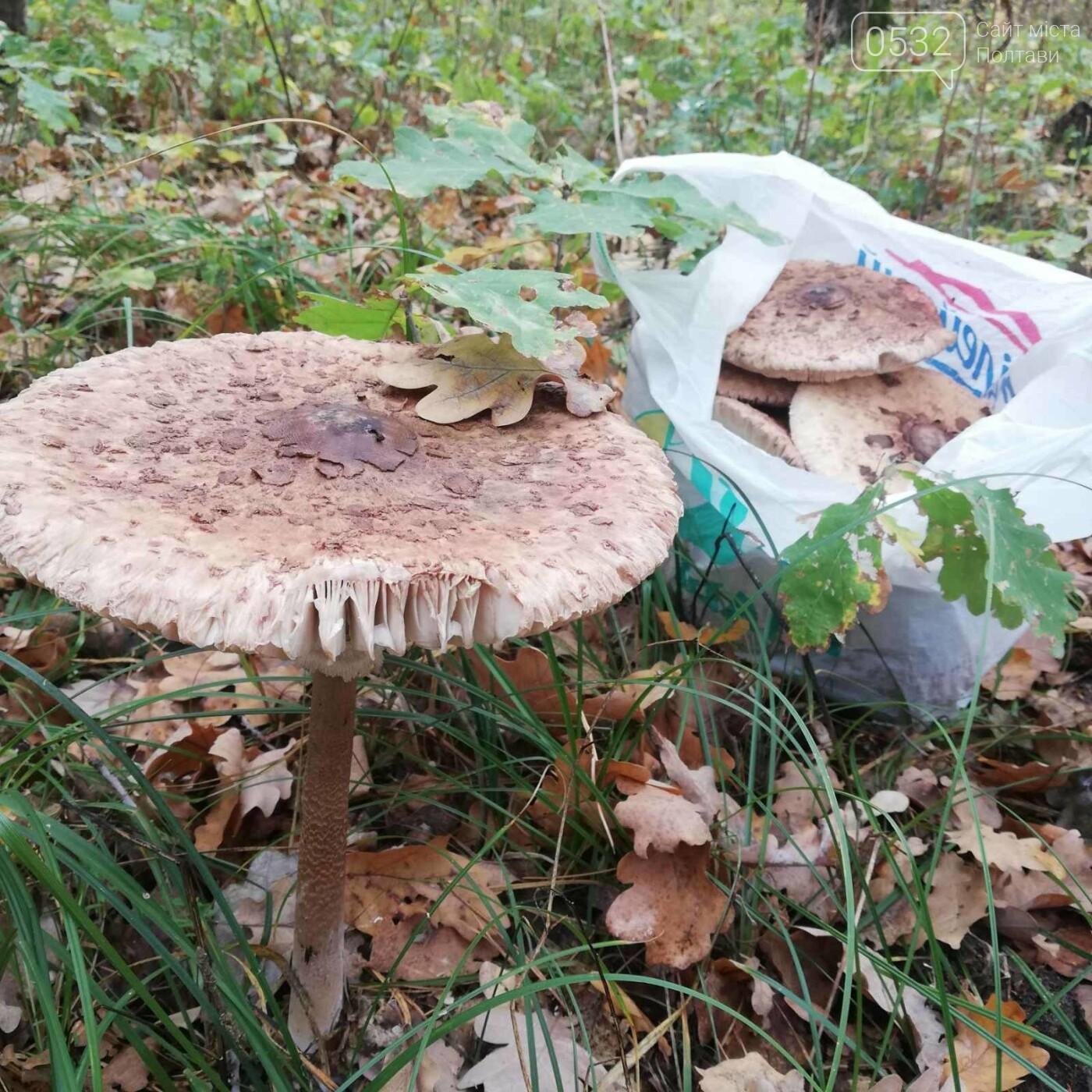 Із Полтави – за парасольками: розкриваємо грибні місця (ФОТОРЕПОРТАЖ), фото-14