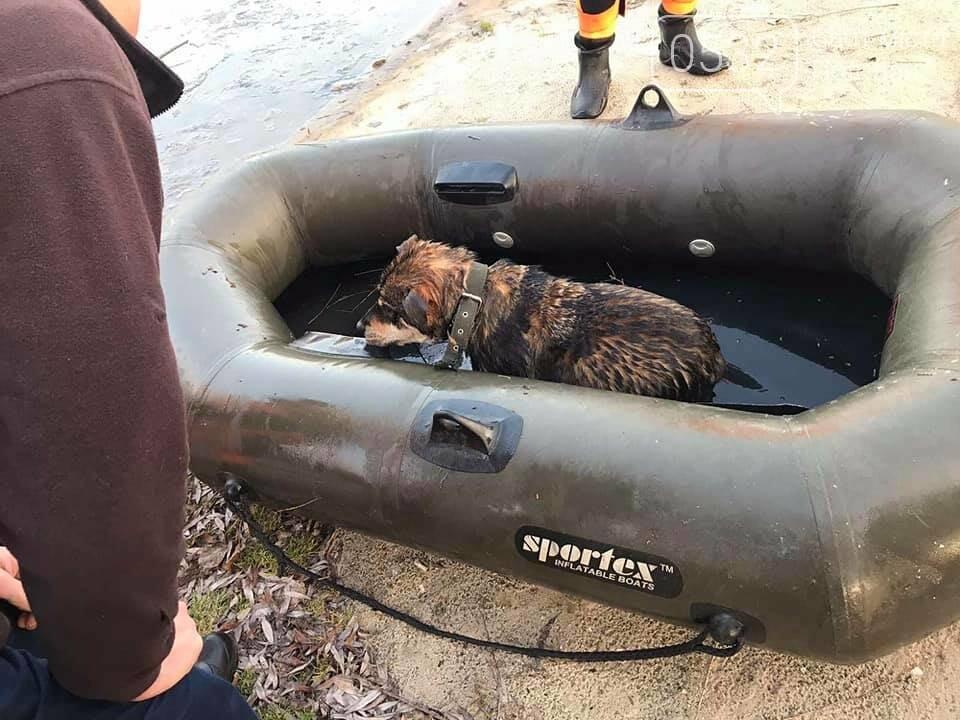У Полтаві рятувальники витягнули із води цуценя, яке на Ворсклі провалилося під лід (ФОТО), фото-4