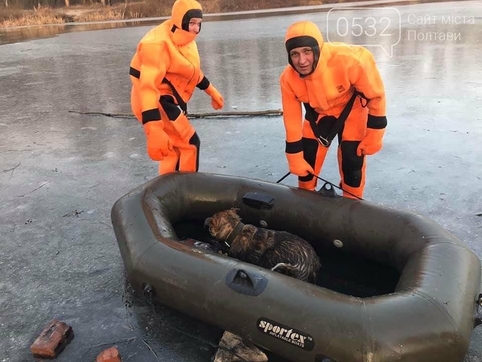 У Полтаві рятувальники витягнули із води цуценя, яке на Ворсклі провалилося під лід (ФОТО), фото-3
