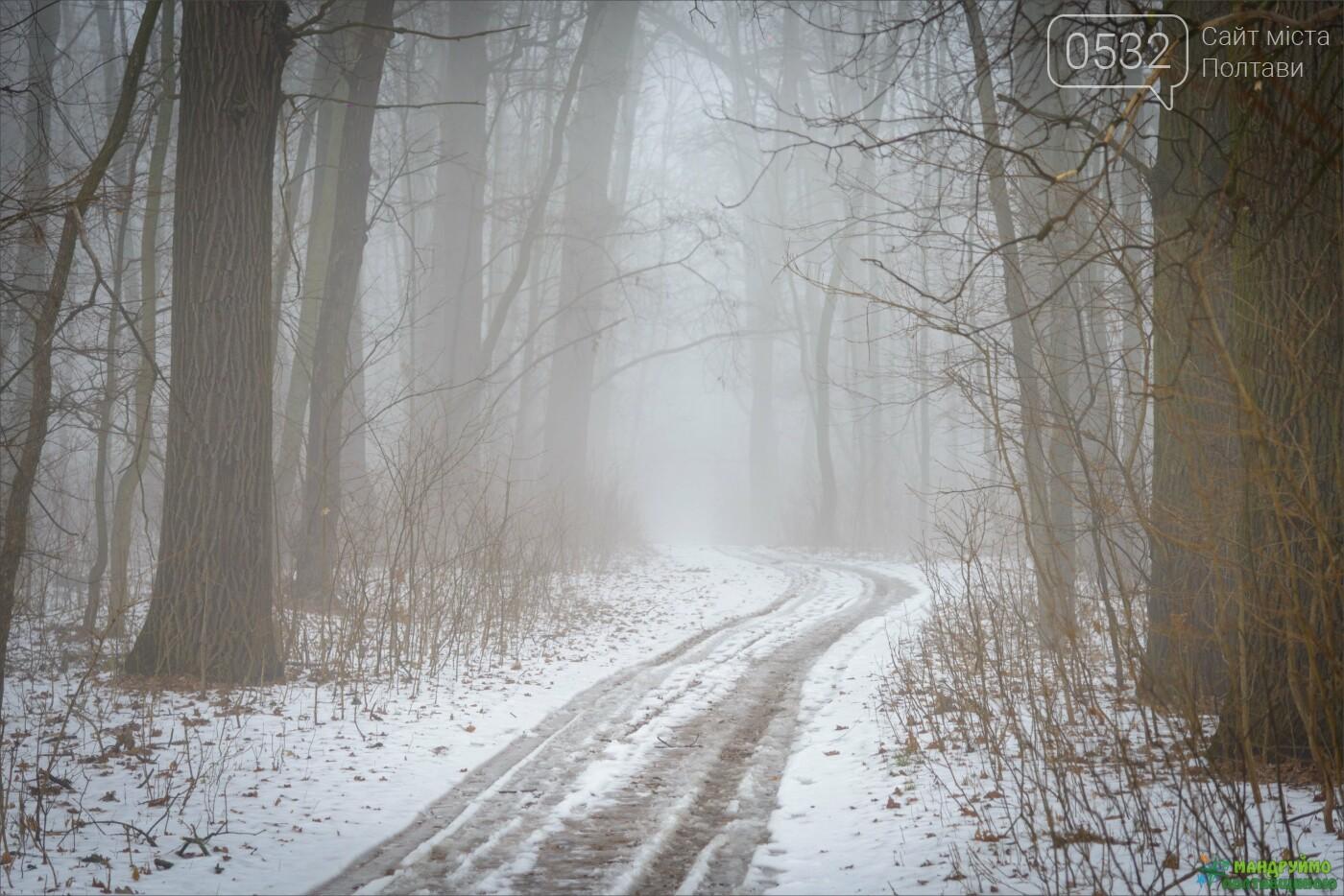«Ліс – живий організм чи людський клопіт?» -  думки експертів з погляду екології і лісового господарства, фото-1